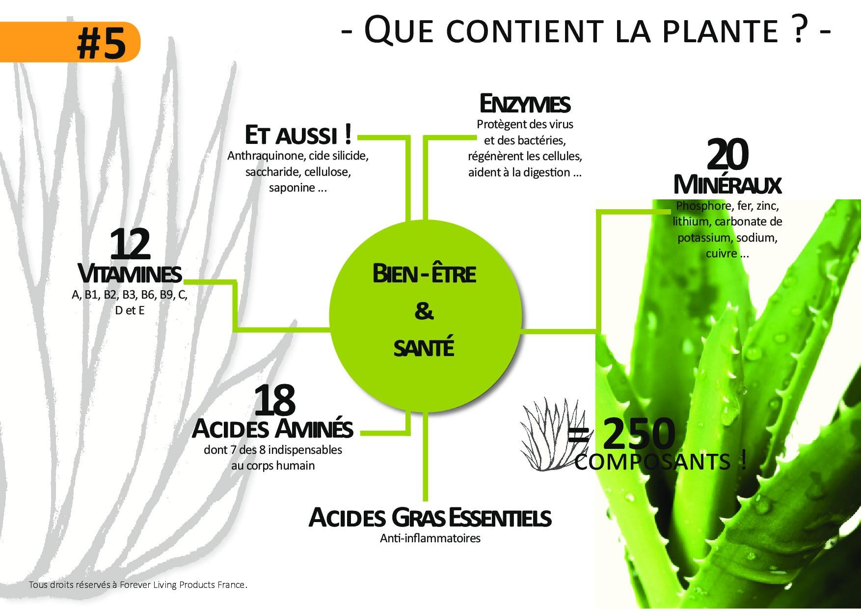 #5_QueContientLa plante